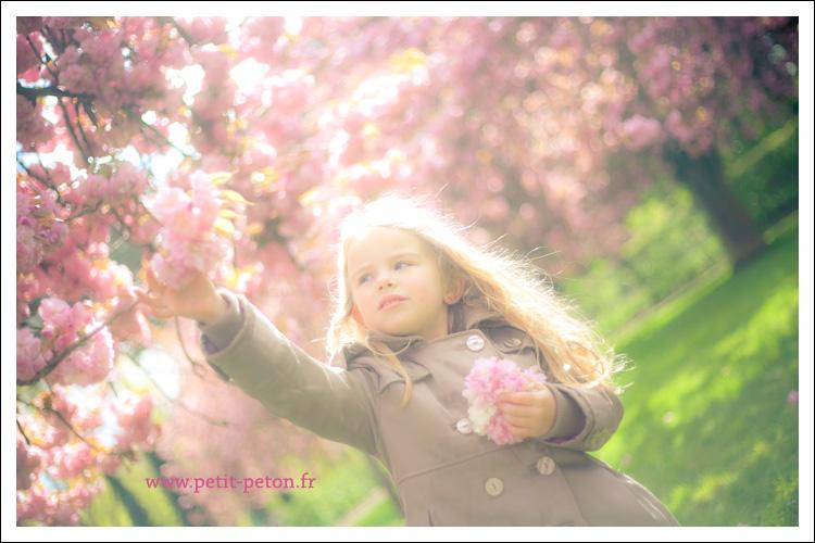 cerisiers2